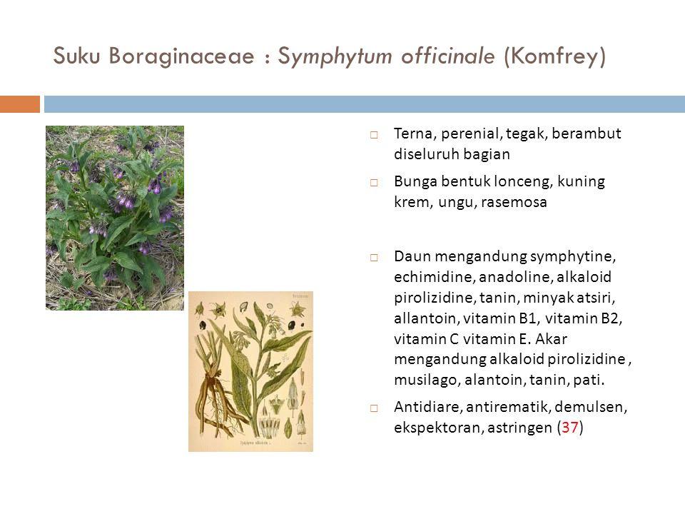 Suku Boraginaceae : Symphytum officinale (Komfrey)  Terna, perenial, tegak, berambut diseluruh bagian  Bunga bentuk lonceng, kuning krem, ungu, rase