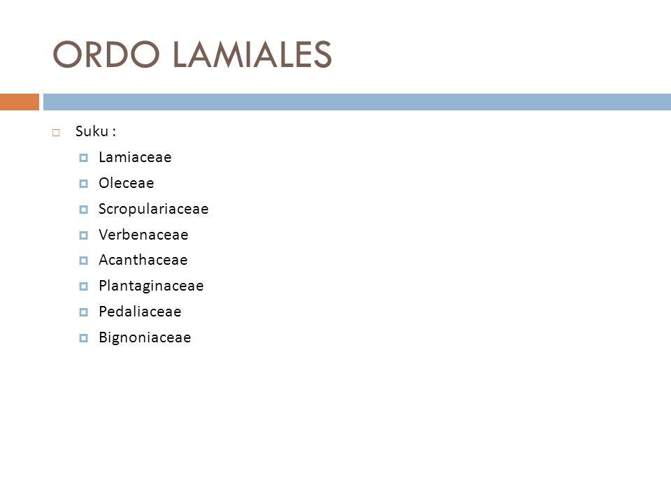 ORDO LAMIALES  Suku :  Lamiaceae  Oleceae  Scropulariaceae  Verbenaceae  Acanthaceae  Plantaginaceae  Pedaliaceae  Bignoniaceae
