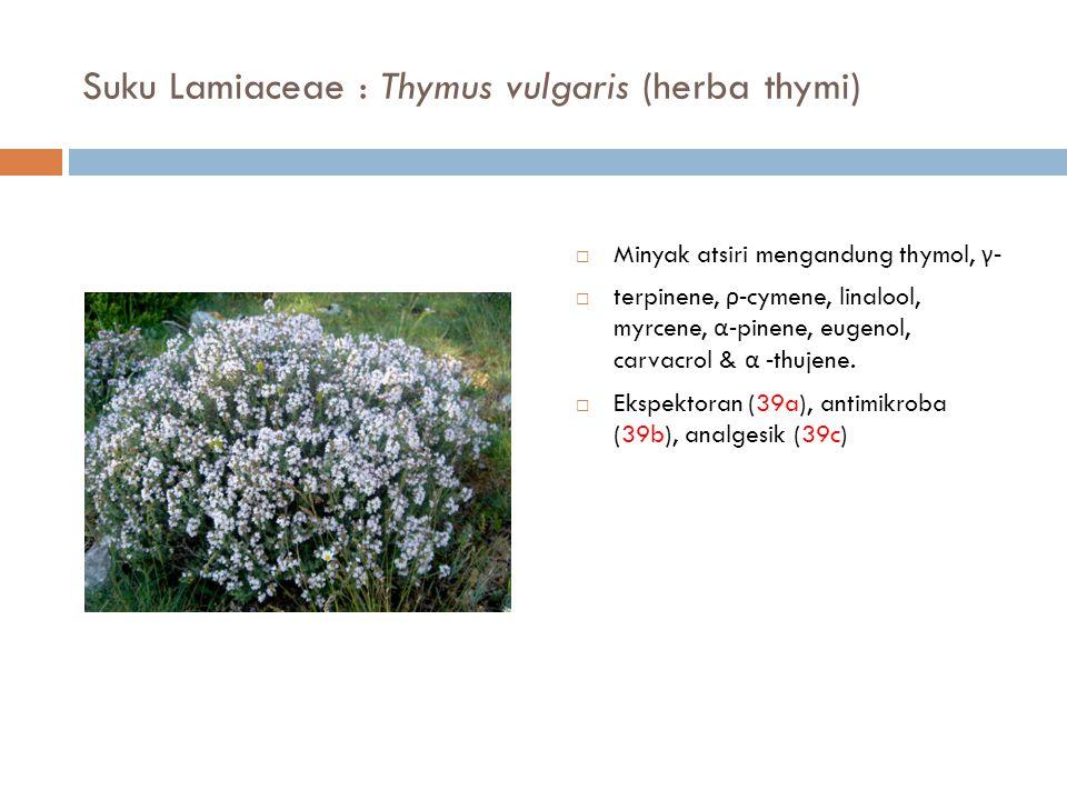 Suku Lamiaceae : Thymus vulgaris (herba thymi)  Minyak atsiri mengandung thymol, γ -  terpinene, ρ -cymene, linalool, myrcene, α -pinene, eugenol, c