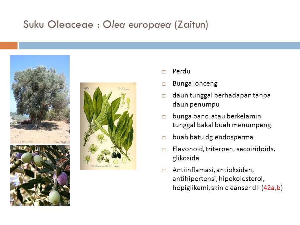 Suku Oleaceae : Olea europaea (Zaitun)  Perdu  Bunga lonceng  daun tunggal berhadapan tanpa daun penumpu  bunga banci atau berkelamin tunggal baka