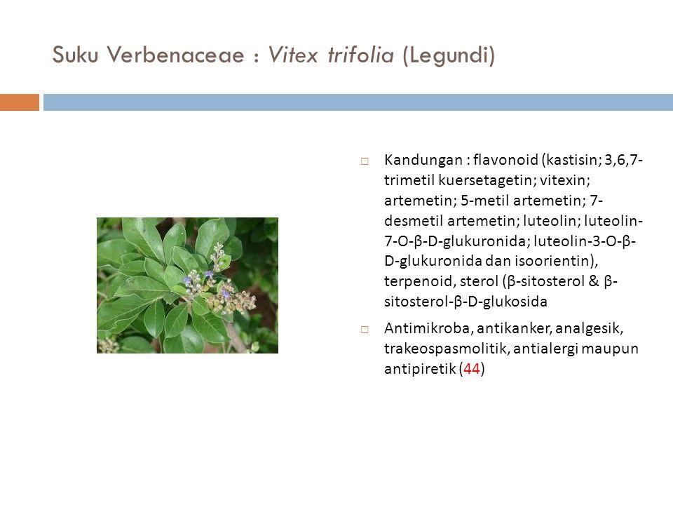 Suku Verbenaceae : Vitex trifolia (Legundi)  Kandungan : flavonoid (kastisin; 3,6,7- trimetil kuersetagetin; vitexin; artemetin; 5-metil artemetin; 7