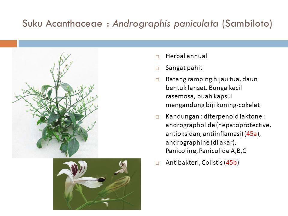 Suku Acanthaceae : Andrographis paniculata (Sambiloto)  Herbal annual  Sangat pahit  Batang ramping hijau tua, daun bentuk lanset. Bunga kecil rase