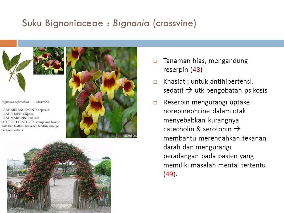 Suku Bignoniaceae : Bignonia (crossvine)  Tanaman hias, mengandung reserpin (48)  Khasiat : untuk antihipertensi, sedatif  utk pengobatan psikosis