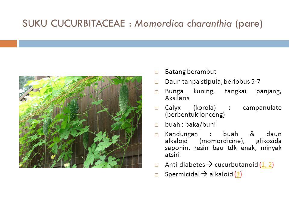 SUKU CUCURBITACEAE : Momordica charanthia (pare)  Batang berambut  Daun tanpa stipula, berlobus 5-7  Bunga kuning, tangkai panjang, Aksilaris  Cal
