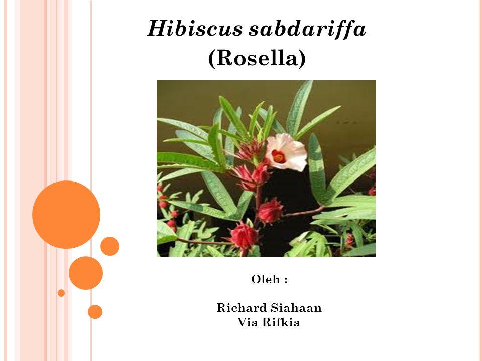 Hibiscus sabdariffa (Rosella) Oleh : Richard Siahaan Via Rifkia
