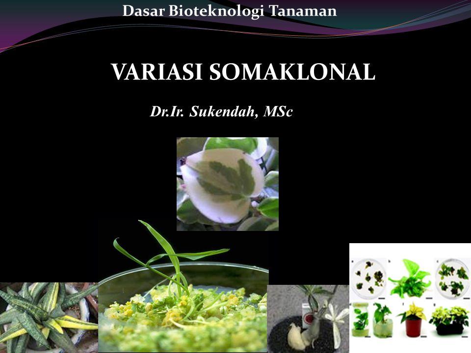 VARIASI SOMAKLONAL Dr.Ir. Sukendah, MSc Dasar Bioteknologi Tanaman