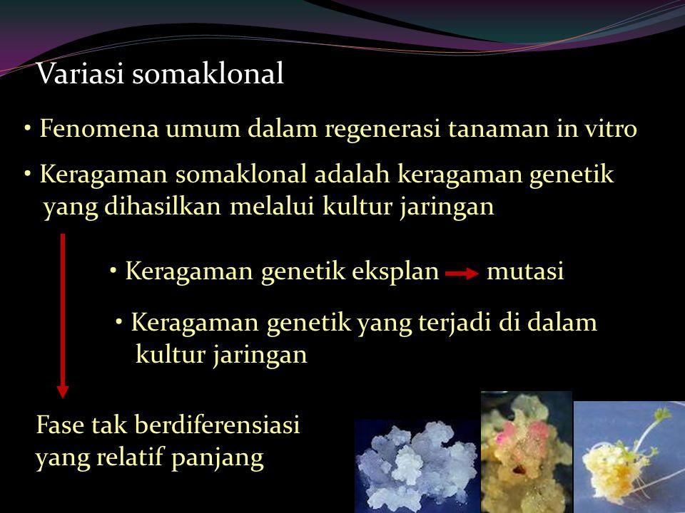 Variasi somaklonal Fenomena umum dalam regenerasi tanaman in vitro Keragaman somaklonal adalah keragaman genetik yang dihasilkan melalui kultur jaringan Keragaman genetik eksplanmutasi Keragaman genetik yang terjadi di dalam kultur jaringan Fase tak berdiferensiasi yang relatif panjang