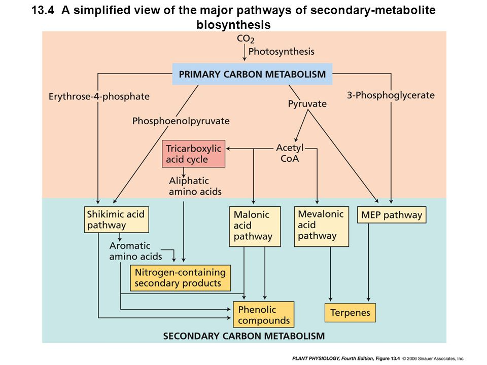 13.4 A simplified view of the major pathways of secondary-metabolite biosynthesis