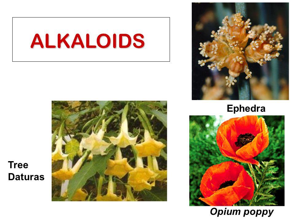 ALKALOIDS Ephedra Opium poppy Tree Daturas