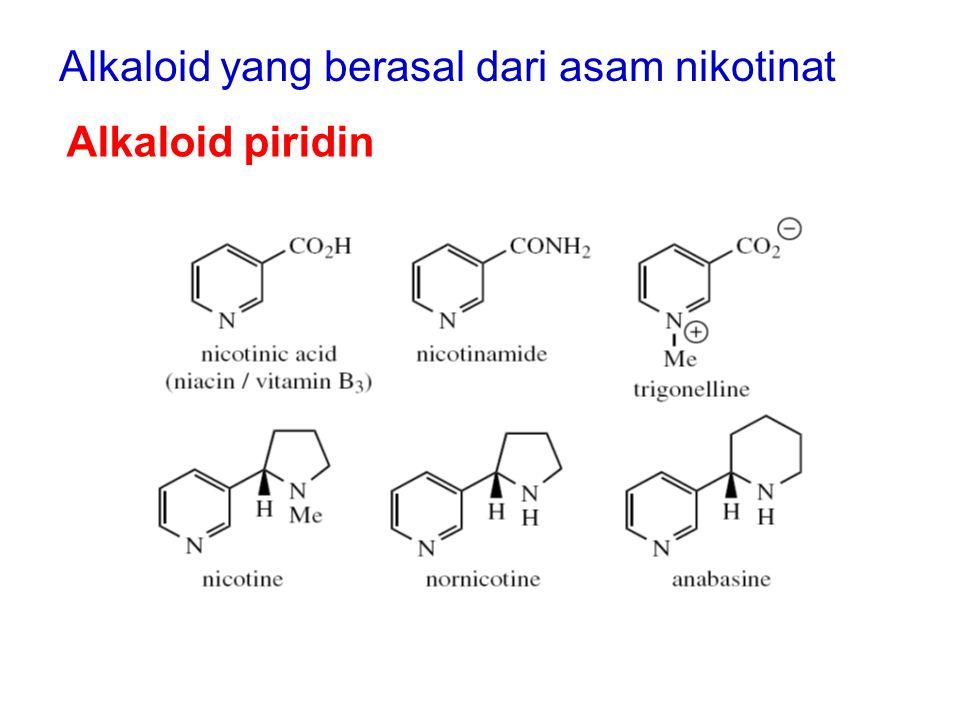 Alkaloid yang berasal dari asam nikotinat Alkaloid piridin
