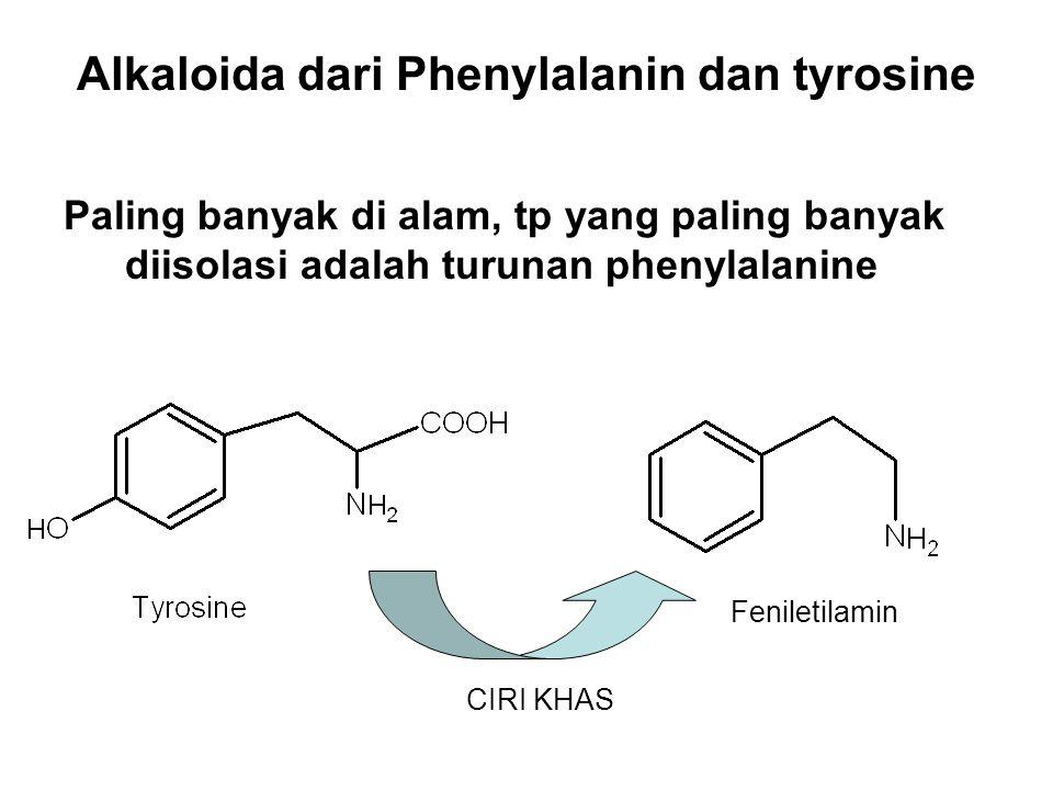 Alkaloida dari Phenylalanin dan tyrosine Paling banyak di alam, tp yang paling banyak diisolasi adalah turunan phenylalanine CIRI KHAS Feniletilamin
