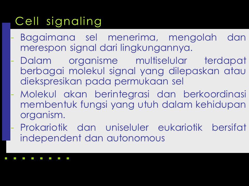 -Bagaimana sel menerima, mengolah dan merespon signal dari lingkungannya. -Dalam organisme multiselular terdapat berbagai molekul signal yang dilepask