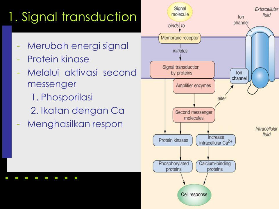 1. Signal transduction -Merubah energi signal -Protein kinase -Melalui aktivasi second messenger 1. Phosporilasi 2. Ikatan dengan Ca -Menghasilkan res