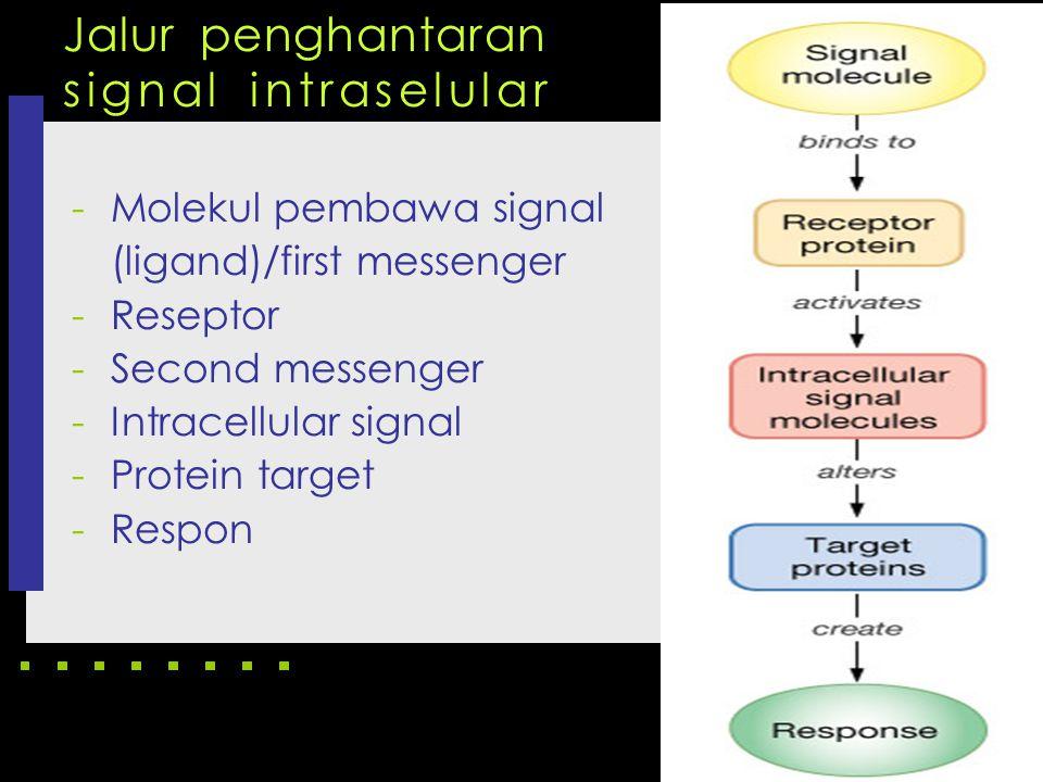 Jalur penghantaran signal intraselular -Molekul pembawa signal (ligand)/first messenger -Reseptor -Second messenger -Intracellular signal -Protein tar