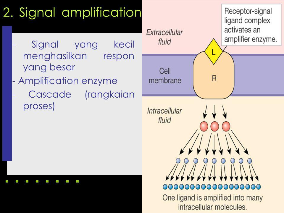 2. Signal amplification - Signal yang kecil menghasilkan respon yang besar - Amplification enzyme - Cascade (rangkaian proses)