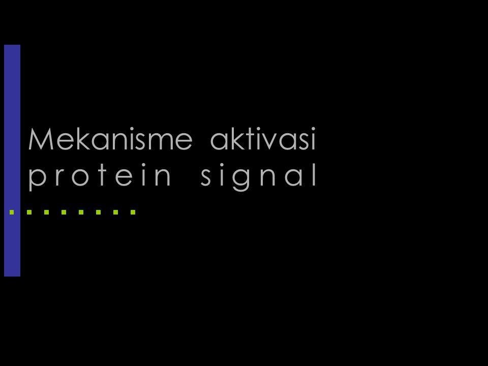 Mekanisme aktivasi protein signal