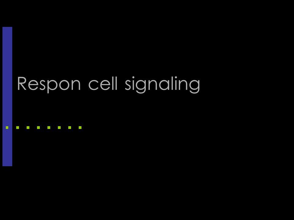 Respon cell signaling