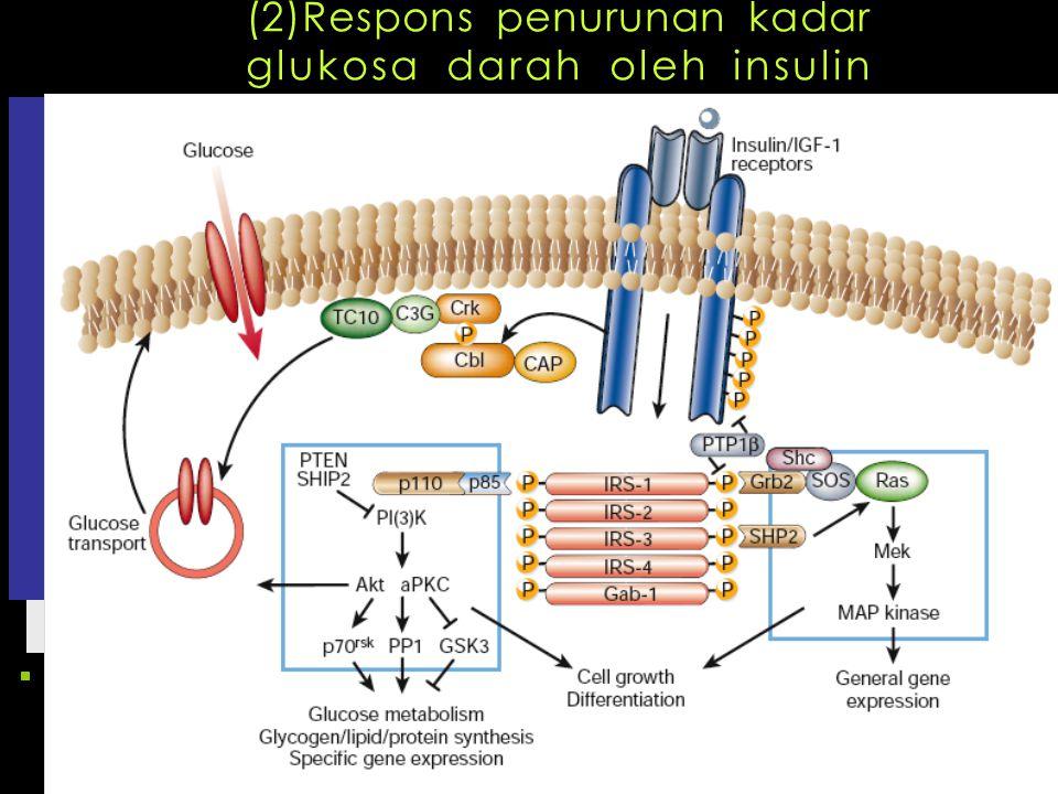 (2)Respons penurunan kadar glukosa darah oleh insulin