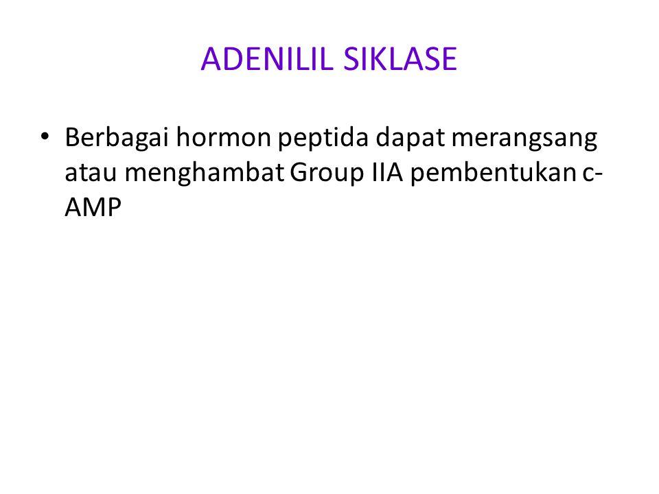 ADENILIL SIKLASE Berbagai hormon peptida dapat merangsang atau menghambat Group IIA pembentukan c- AMP