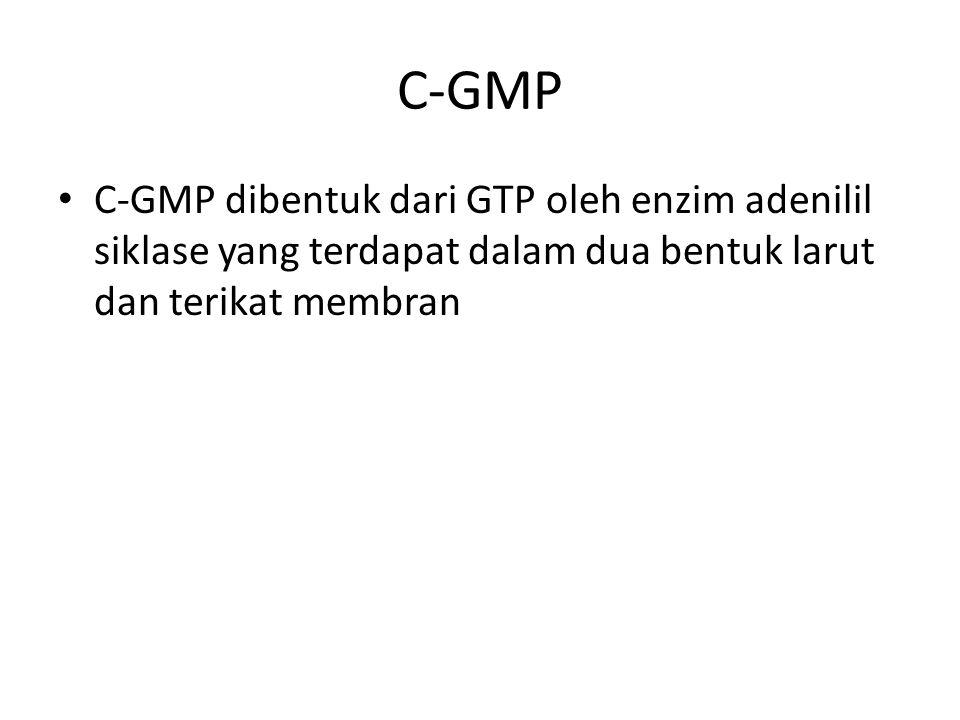 C-GMP C-GMP dibentuk dari GTP oleh enzim adenilil siklase yang terdapat dalam dua bentuk larut dan terikat membran