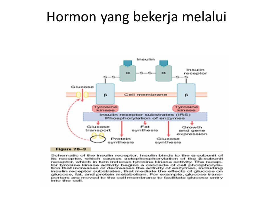 Hormon yang bekerja melalui proteinkinase kaskade