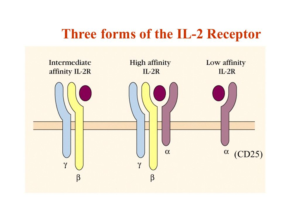Three forms of the IL-2 Receptor (CD25)
