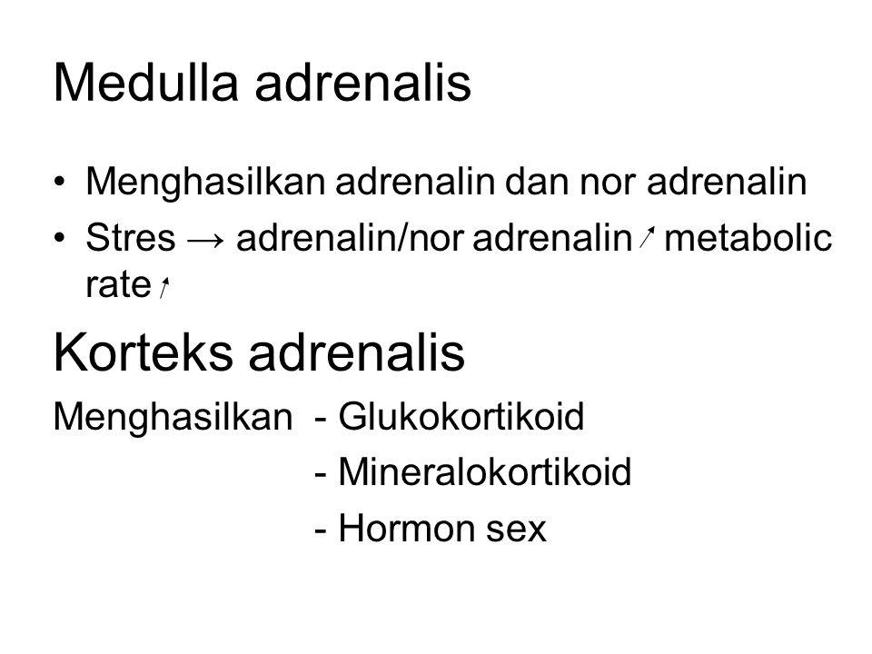 Glukokortikoid Aktifitas terbesar kortisol - Meningkatkan - Kadar aa drh - Glukoneogenesis - Efek anti inflamasi Mineralokortikoid Aldosteron - Mengendalikan Na + dan K + darah - Memacu reabsorbsi Na dan ekskresi K di ginjal - Sekresi aldosteron dikendalikan oleh kadar Na darah