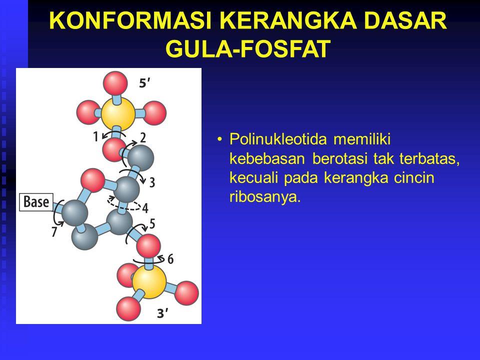 KONFORMASI KERANGKA DASAR GULA-FOSFAT Polinukleotida memiliki kebebasan berotasi tak terbatas, kecuali pada kerangka cincin ribosanya.