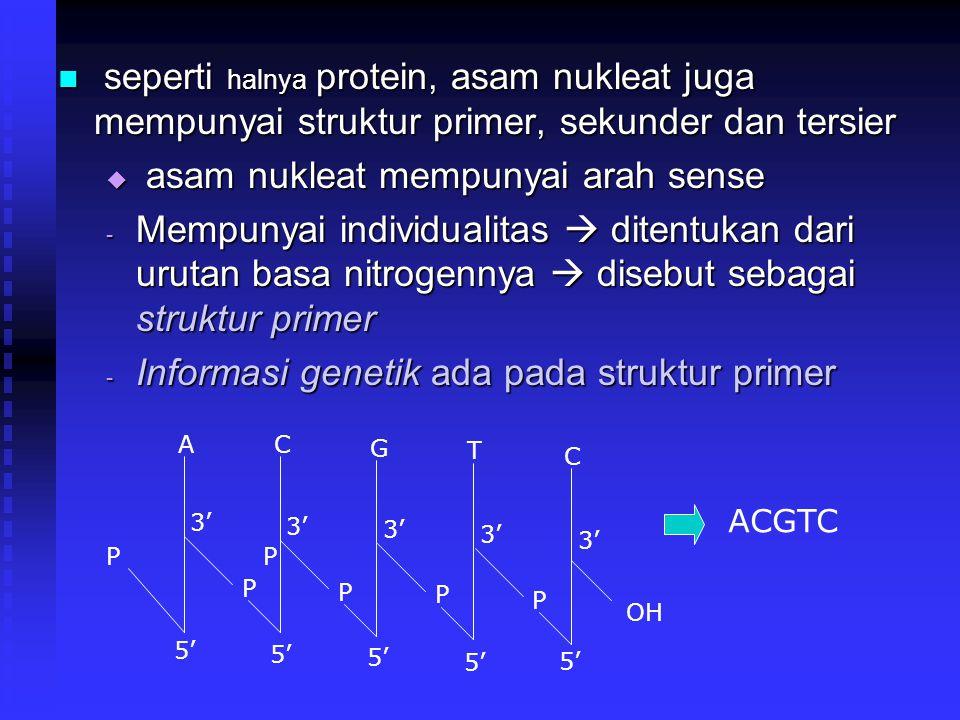 seperti halnya protein, asam nukleat juga mempunyai struktur primer, sekunder dan tersier seperti halnya protein, asam nukleat juga mempunyai struktur