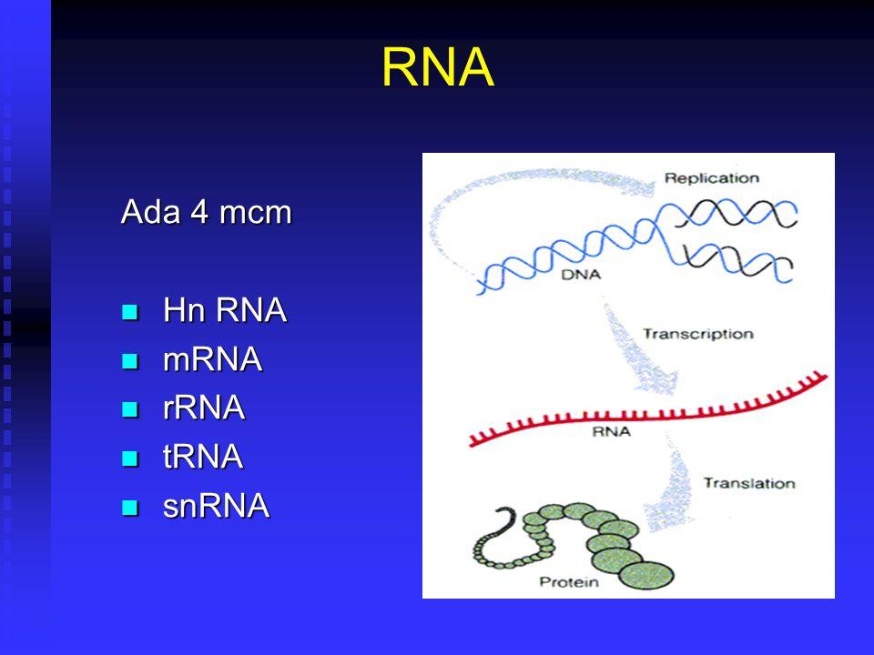 RNA Ada 4 mcm Hn RNA Hn RNA mRNA mRNA rRNA rRNA tRNA tRNA snRNA snRNA