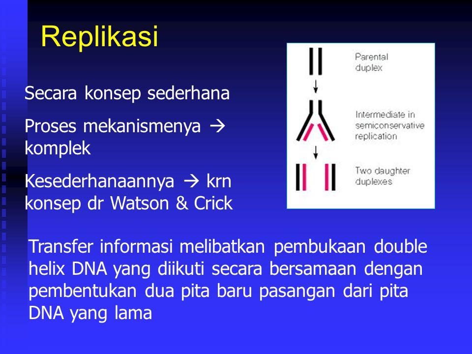 Replikasi Secara konsep sederhana Proses mekanismenya  komplek Kesederhanaannya  krn konsep dr Watson & Crick Transfer informasi melibatkan pembukaa