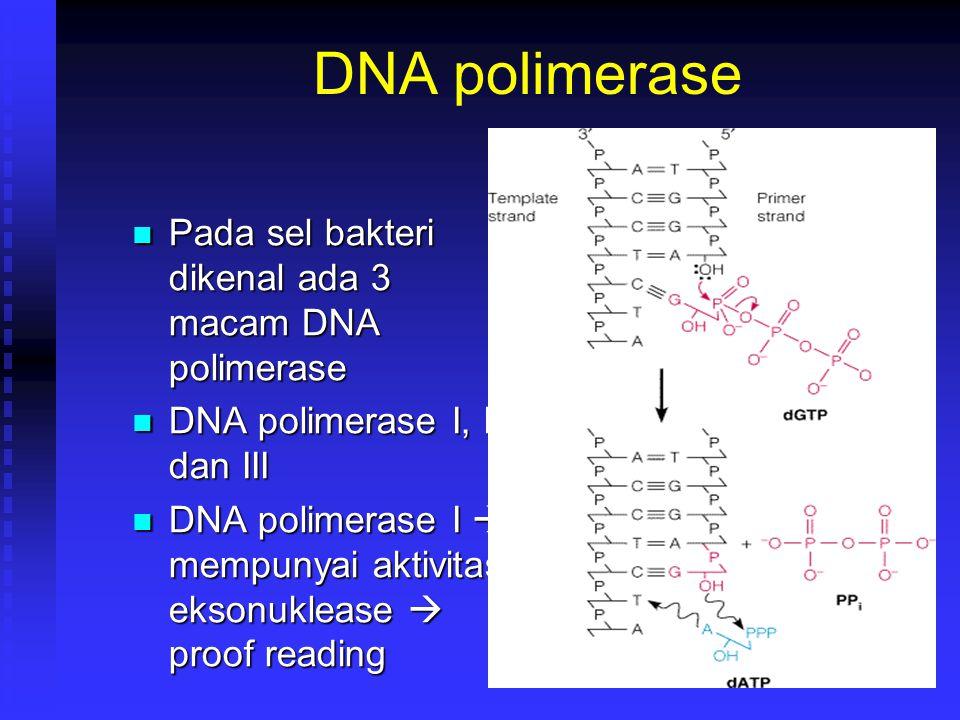 DNA polimerase Pada sel bakteri dikenal ada 3 macam DNA polimerase Pada sel bakteri dikenal ada 3 macam DNA polimerase DNA polimerase I, II dan III DN