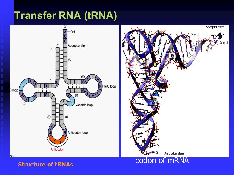 Transfer RNA (tRNA) composed of  a nucleic acid and a specific amino acid  provide the link between the nucleic acid sequence of mRNA and the amino acid sequence it codes for.