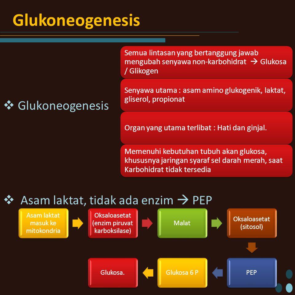 Glukoneogenesis  Glukoneogenesis  Asam laktat, tidak ada enzim  PEP Semua lintasan yang bertanggung jawab mengubah senyawa non-karbohidrat  Glukosa / Glikogen Senyawa utama : asam amino glukogenik, laktat, gliserol, propionat Organ yang utama terlibat : Hati dan ginjal.