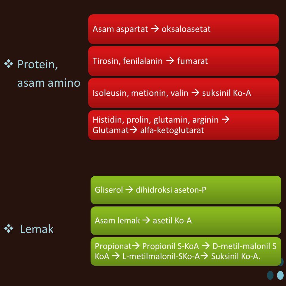  Protein, asam amino  Lemak Asam aspartat  oksaloasetatTirosin, fenilalanin  fumaratIsoleusin, metionin, valin  suksinil Ko-A Histidin, prolin, glutamin, arginin  Glutamat  alfa-ketoglutarat Gliserol  dihidroksi aseton-PAsam lemak  asetil Ko-A Propionat  Propionil S-KoA  D-metil-malonil S KoA  L-metilmalonil-SKo-A  Suksinil Ko-A.