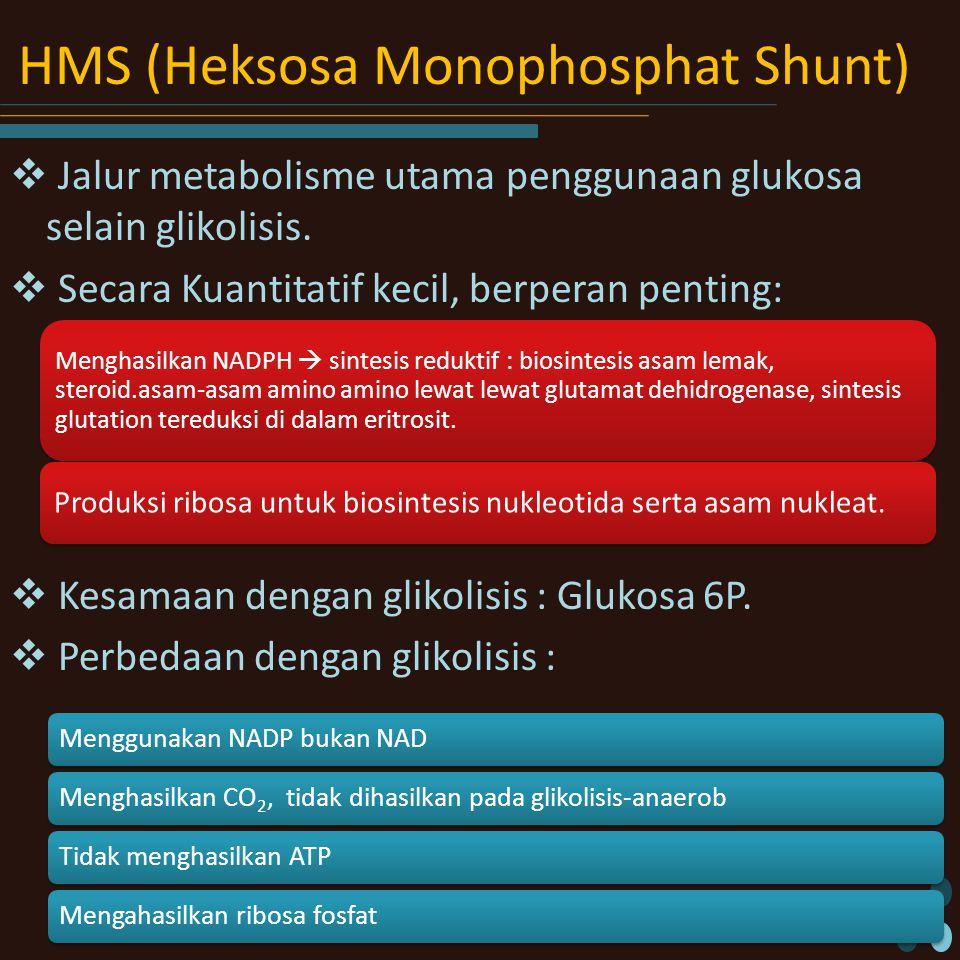 HMS (Heksosa Monophosphat Shunt)  Jalur metabolisme utama penggunaan glukosa selain glikolisis.  Secara Kuantitatif kecil, berperan penting:  Kesam