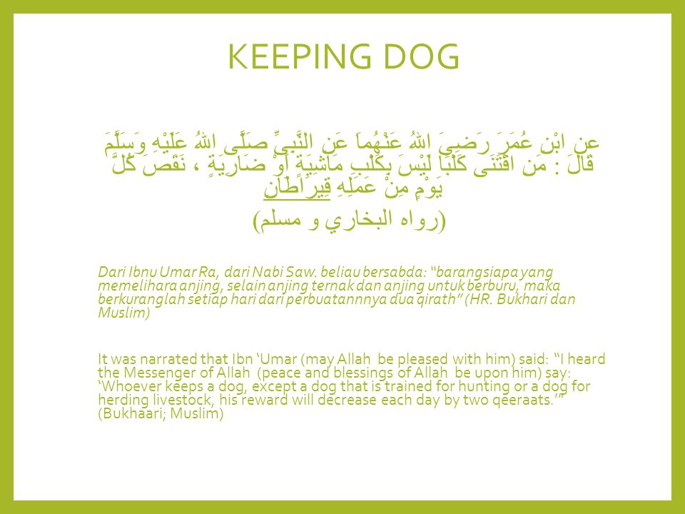 KEEPING DOG عن ابْنِ عُمَرَ رَضِىَ اللهُ عَنْهُماَ عَنِ النَّبِىِّ صَلَّى اللهُ عَلَيْهِ وَسَلَّمَ قَالَ : مَنِ اقْتَنَى كَلْبًا لَيْسَ بِكَلْبِ مَاشِ