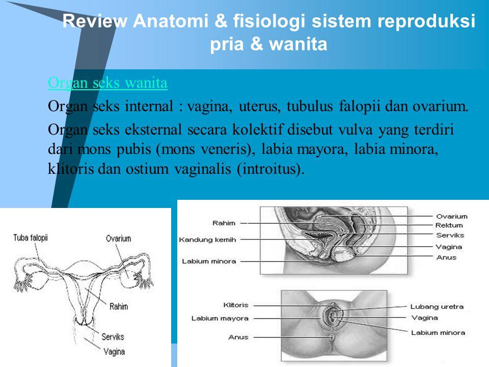 Review Anatomi & fisiologi sistem reproduksi pria & wanita  Organ seks wanita Organ seks internal : vagina, uterus, tubulus falopii dan ovarium. Orga