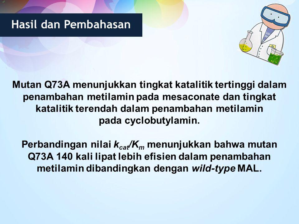 Hasil dan Pembahasan Mutan Q73A menunjukkan tingkat katalitik tertinggi dalam penambahan metilamin pada mesaconate dan tingkat katalitik terendah dala