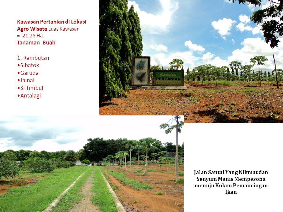 Kawasan Pertanian di Lokasi Agro Wisata Luas Kawasan = 21,28 Ha. Tanaman Buah 1. Rambutan Sibatok Garuda Jainal Si Timbul Antalagi Jalan Santai Yang N