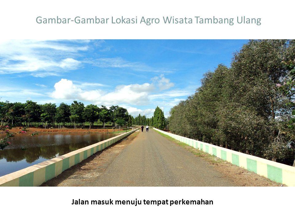 Gambar-Gambar Lokasi Agro Wisata Tambang Ulang Jalan masuk menuju tempat perkemahan