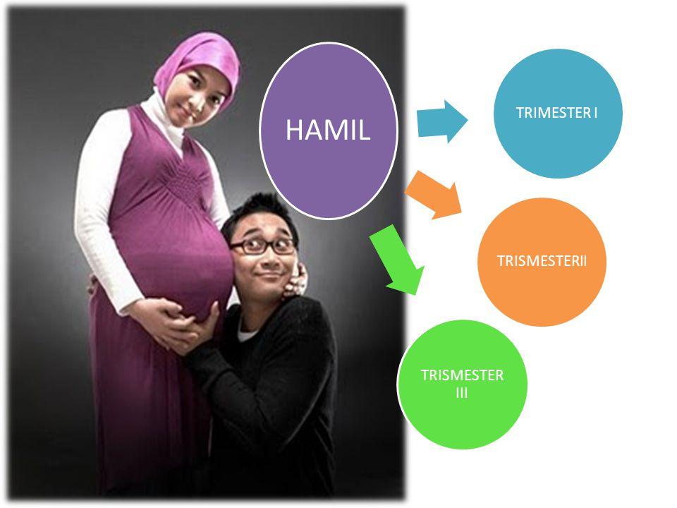 HAMIL TRIMESTER I TRISMESTER III TRISMESTERII