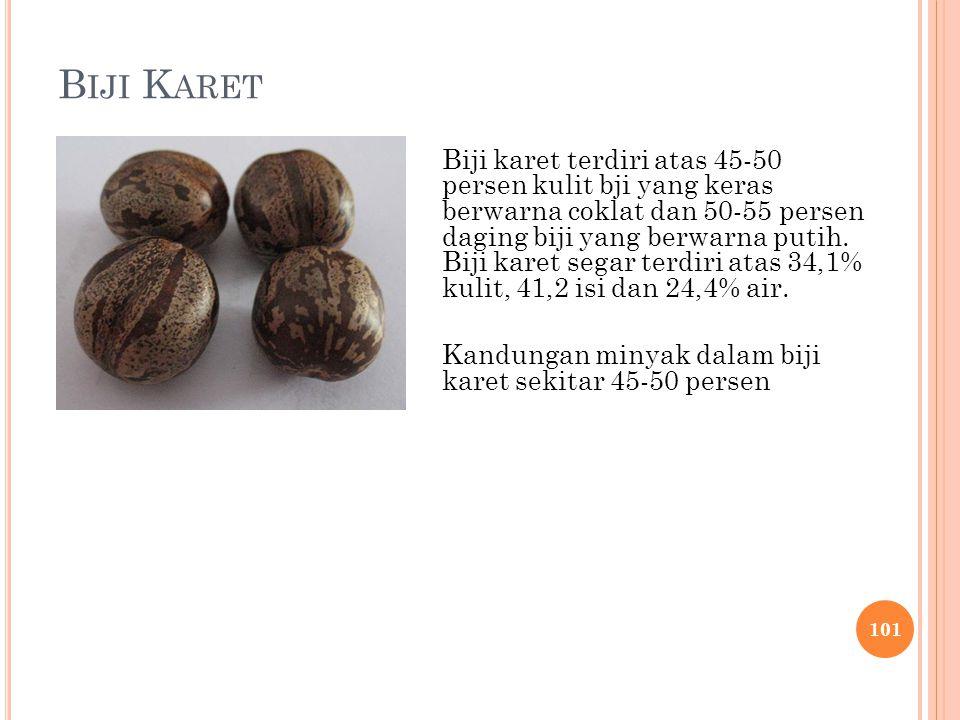 B IJI K ARET Biji karet terdiri atas 45-50 persen kulit bji yang keras berwarna coklat dan 50-55 persen daging biji yang berwarna putih. Biji karet se