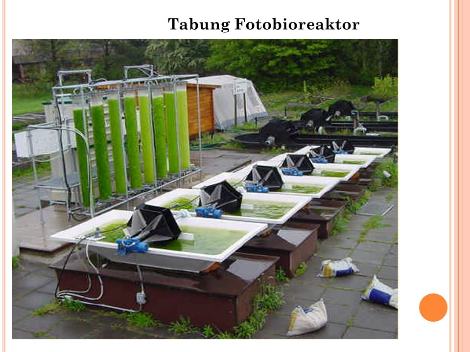 Tabung Fotobioreaktor