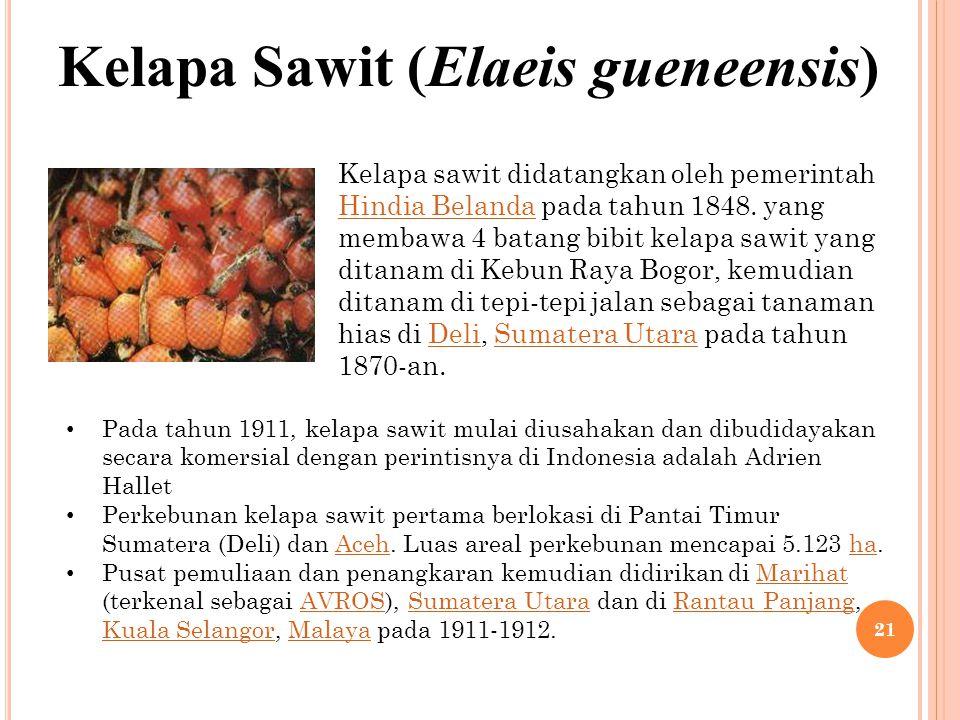 Kelapa Sawit (Elaeis gueneensis) Kelapa sawit didatangkan oleh pemerintah Hindia Belanda pada tahun 1848. yang membawa 4 batang bibit kelapa sawit yan