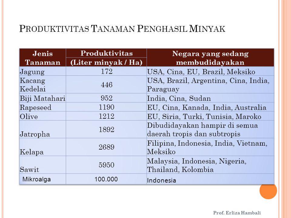 P RODUKTIVITAS T ANAMAN P ENGHASIL M INYAK Sumber : Aun (2006) Prof. Erliza Hambali
