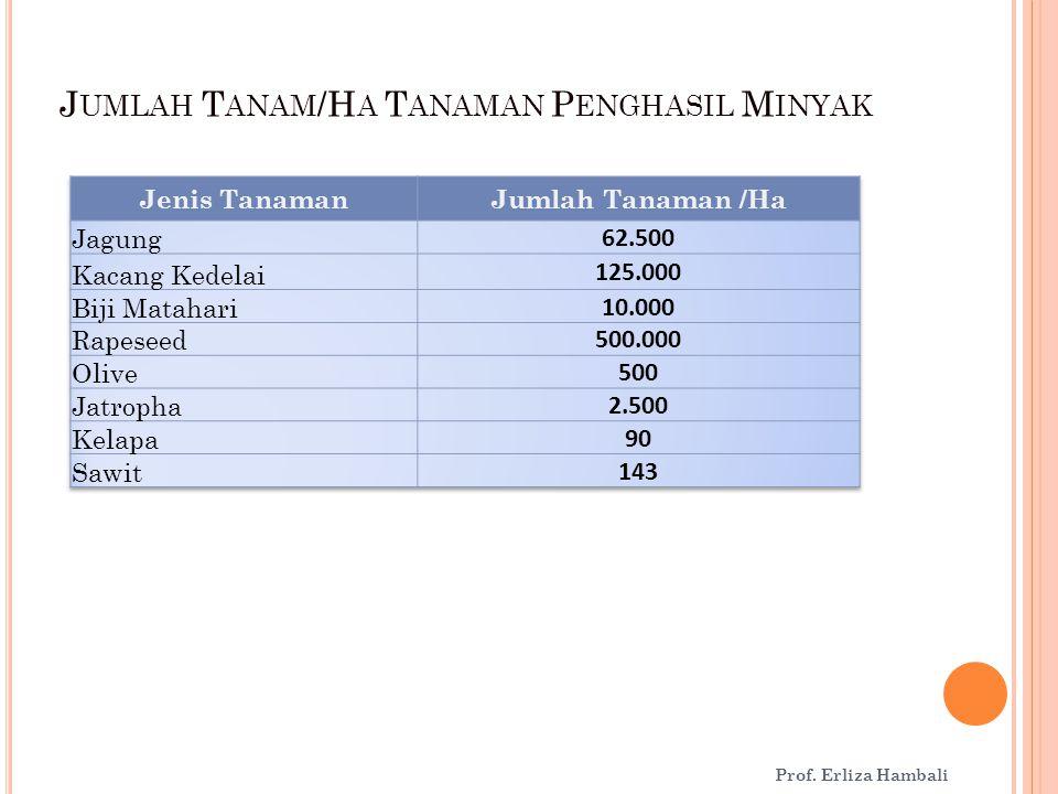 J UMLAH T ANAM /H A T ANAMAN P ENGHASIL M INYAK Prof. Erliza Hambali