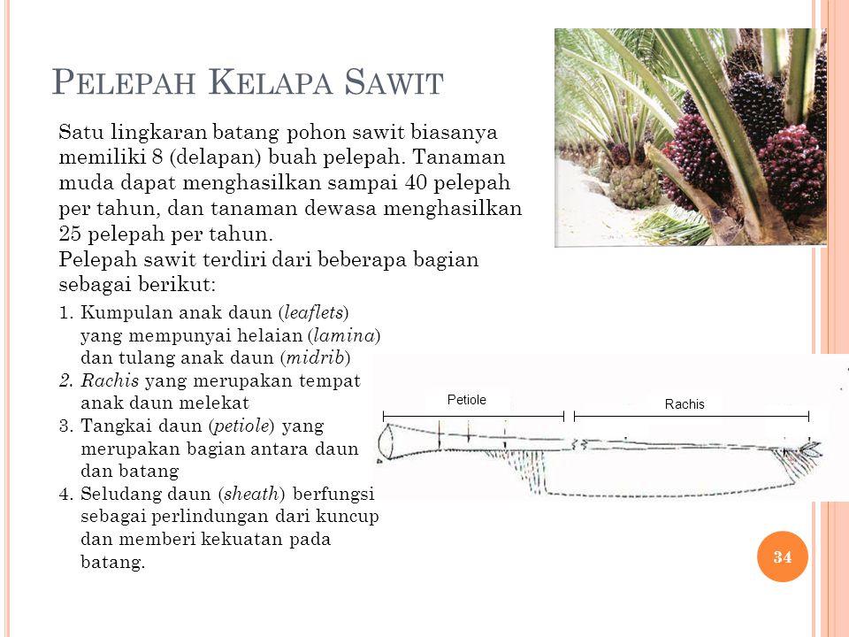 P ELEPAH K ELAPA S AWIT Petiole Rachis Satu lingkaran batang pohon sawit biasanya memiliki 8 (delapan) buah pelepah. Tanaman muda dapat menghasilkan s