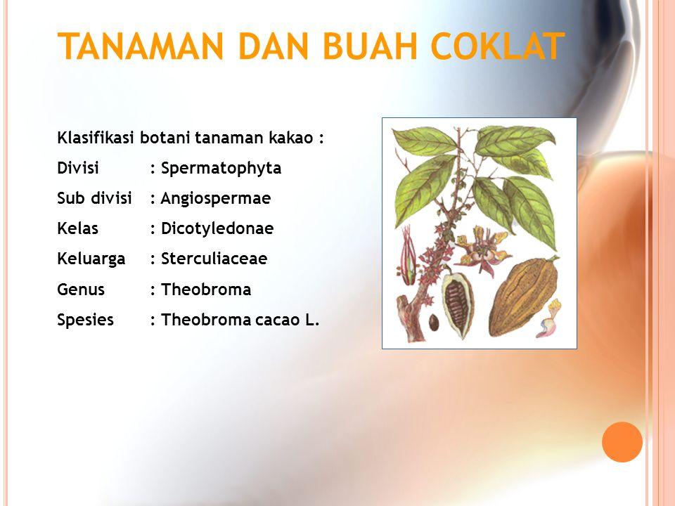 TANAMAN DAN BUAH COKLAT Klasifikasi botani tanaman kakao : Divisi : Spermatophyta Sub divisi : Angiospermae Kelas : Dicotyledonae Keluarga : Sterculia