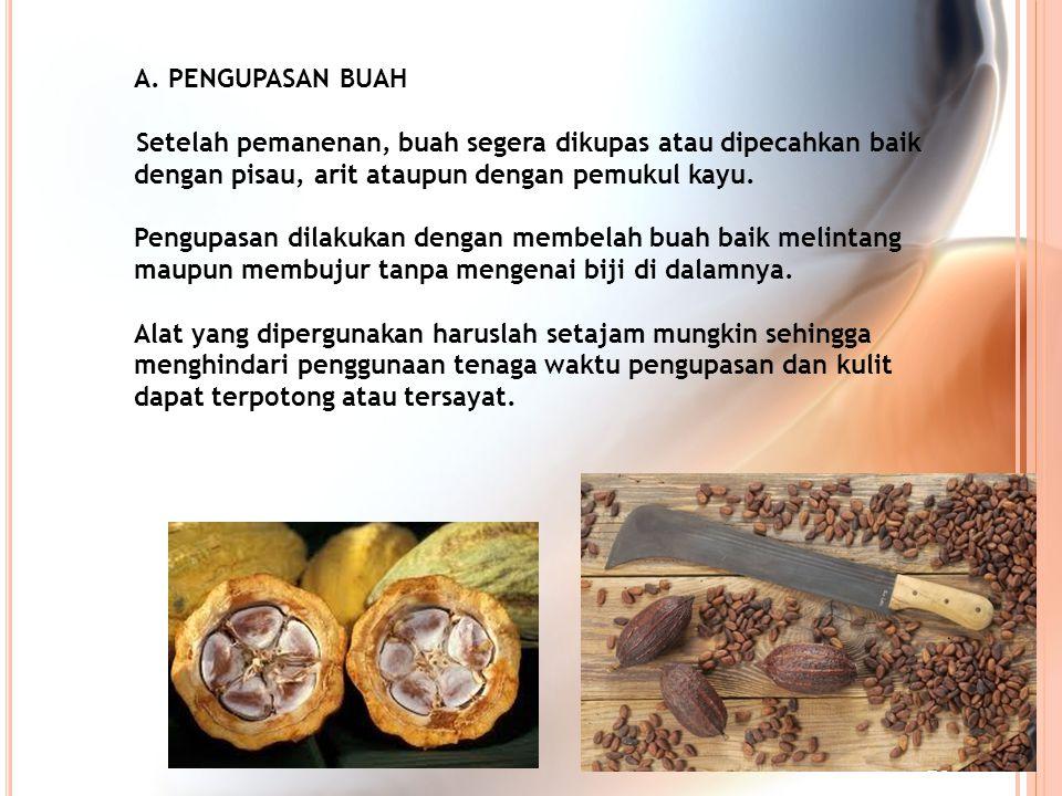 A. PENGUPASAN BUAH Setelah pemanenan, buah segera dikupas atau dipecahkan baik dengan pisau, arit ataupun dengan pemukul kayu. Pengupasan dilakukan de